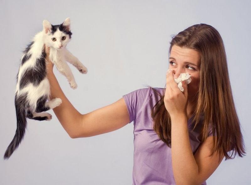 Собаки и кошек не вызывающие аллергию